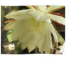 Pastel Flower -Close Up Poster