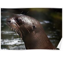 Cool Giant Otter Poster