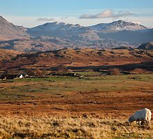 Esk Pike And Bowfell From Birker Moor by SteveMG