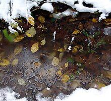 Woodland Pond by Jann Ashworth