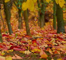 Carpet of Autumn Leaves by Greg Webb