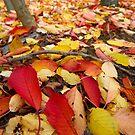 Carpet of Autumn Leaves by Greg Webb
