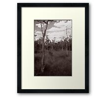 Trees - Big Cypress Preserve Framed Print