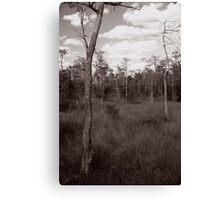 Trees - Big Cypress Preserve Canvas Print