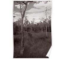Trees - Big Cypress Preserve Poster