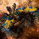 Blairgowrie Nudibranch by Mark Jones