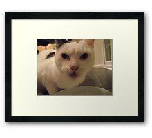 Hi pussy Framed Print