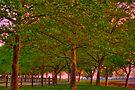 Seabrook Road Treeline at Dawn by Kim McClain Gregal