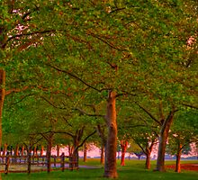 Seabrook Road Treeline at Dawn by Kim McClain Gregal
