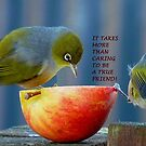 Friendship! - It Takes More Than Caring...Card - Silvereye - NZ by AndreaEL