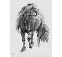 Black Horse sumi-e original watercolor painting Photographic Print