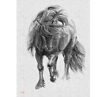 Black Horse sumi-e original watercolor painting Photographic Print