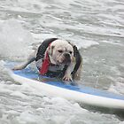 Bulldog Surfing2 by Karen Hight