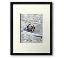Bulldog Surfing2 Framed Print