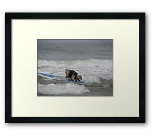 Bulldog Surfing3 Framed Print