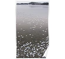 Frosty Morning on Goodfish Lake Poster