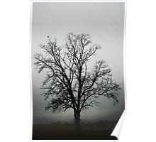 November Tree In Fog Poster