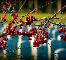 Hanging On To Memories by Monica M. Scanlan