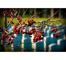 Hanging On To Memories Photographic Print