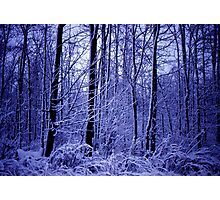 Winter Woods  Photographic Print
