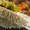lichen on a rock by Manon Boily