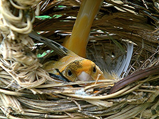 Look, can't a bird have any privacy ? by Roy  Massicks