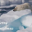 Polar Bear - Merry Christmas Card by Steve Bulford