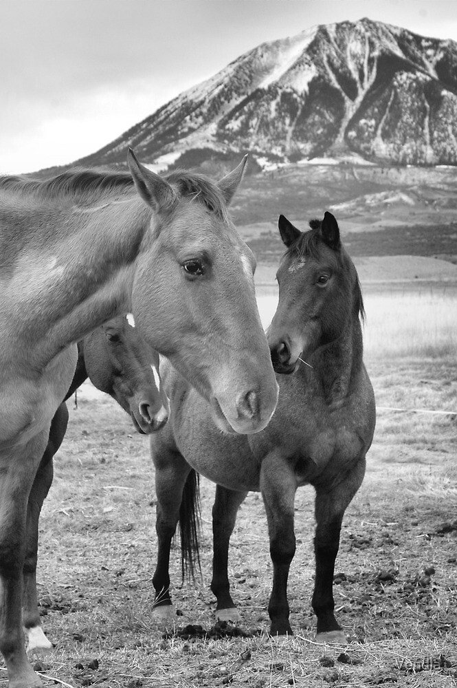 The Herd by Vendla
