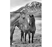 The Herd Photographic Print