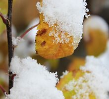 Autumn Snow by Debbie Roelle
