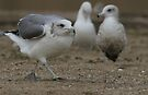 Sneaky Seagull On a Mission by Corri Gryting Gutzman