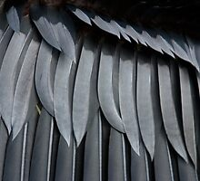 Macro of a Birds Wing Feathers by John  Harmon