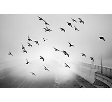 With Wings at a Standstill Photographic Print