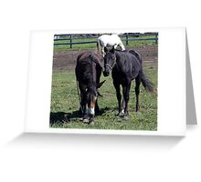Horse and Mule Greeting Card