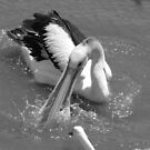 Pelican  by bobby1