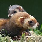There's a polecat about by Anthony Brewer