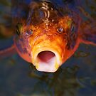 Don't Be Koi With Me! by Lisa Baumeler