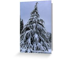 Snow Laden Greeting Card