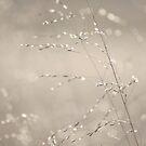 Soft Sparkles by reindeer