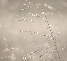 Soft Sparkles by Kelly Chiara