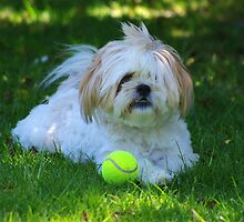 Dog and Ball by hurky