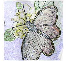 Butterfly, Colored Pencil Poster