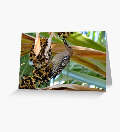 Gila Woodpecker & Berri~licious  Greeting Card