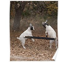 Goats at Play Poster