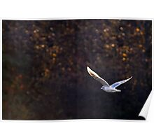 Fly Away Home Poster