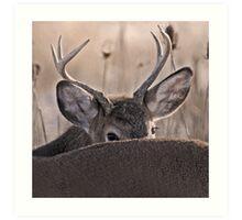 peak a boo buck Art Print