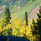 Along the million dollar highway by Ann Reece