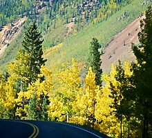 Along the million dollar highway by Ann Reece