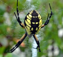 Garden Orb Weaver Spider Sticker