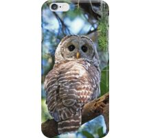 Barred Owl Photograph iPhone Case/Skin